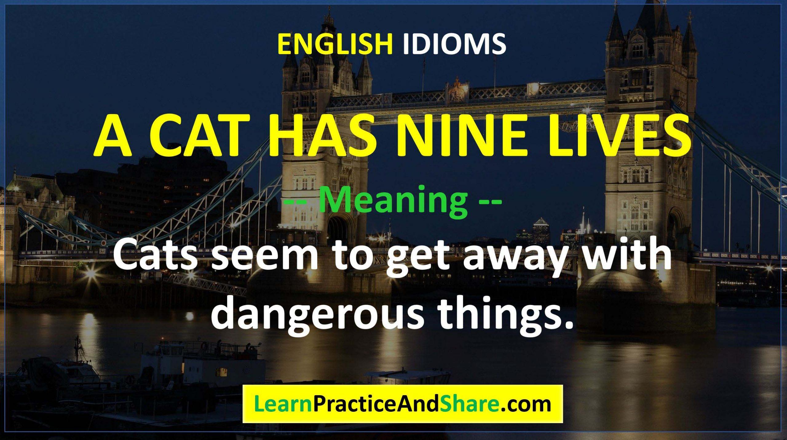 English Idiom - A Cat Has Nine Lives
