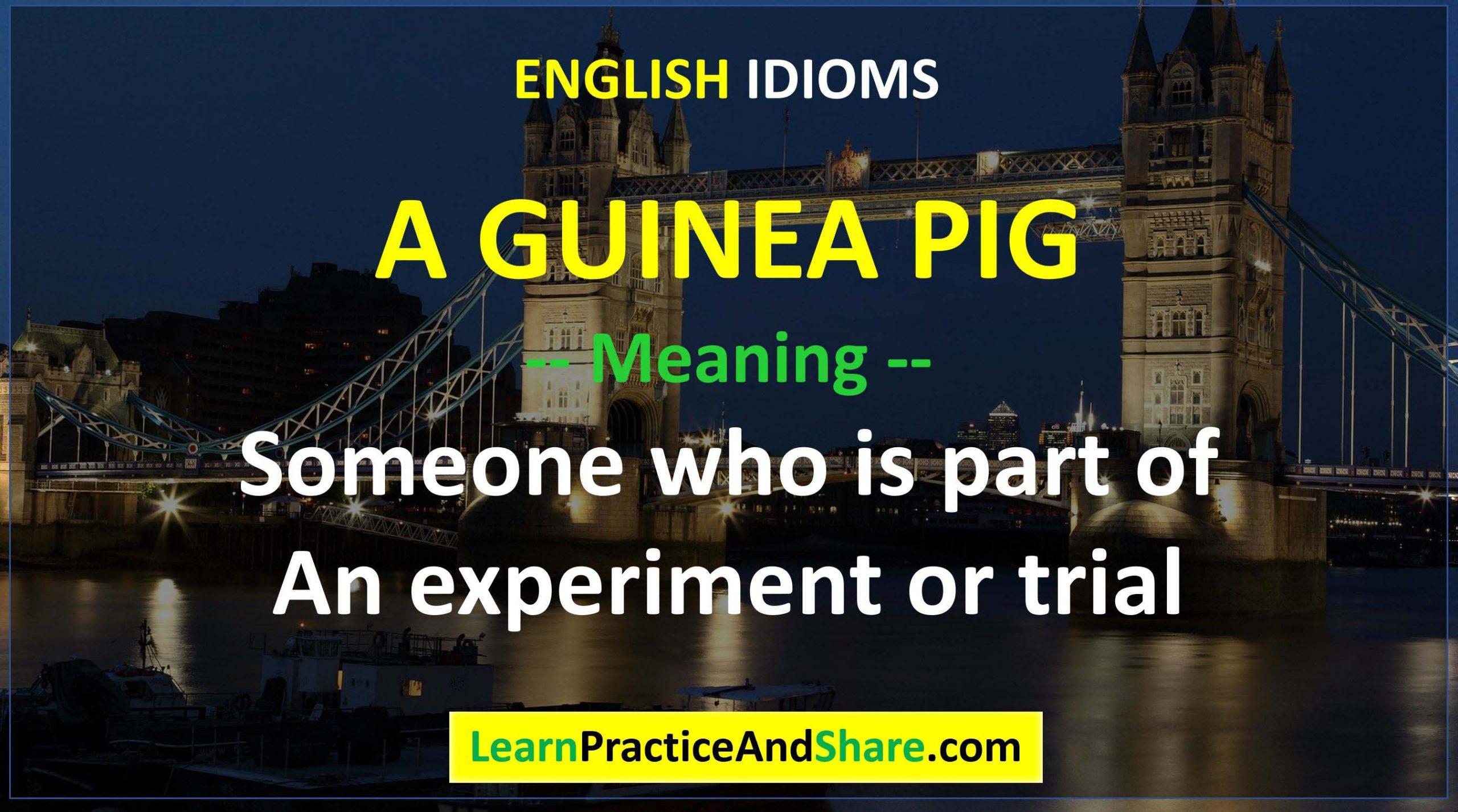 English Idiom - A Guinea Pig