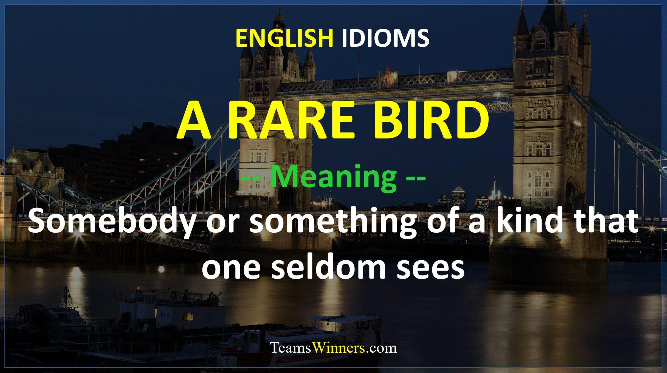 English Idiom - A Rare Bird
