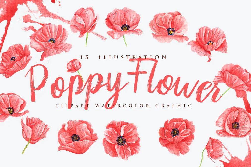 15 Watercolor Poppy Flower Illustration