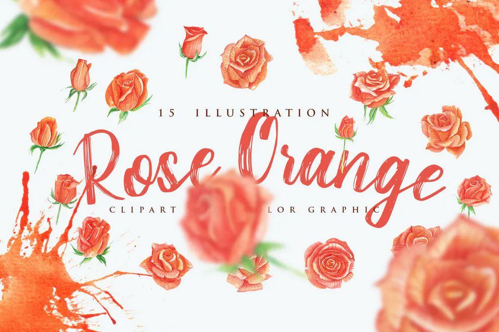 15 Watercolor Rose Orange Flower Illustration