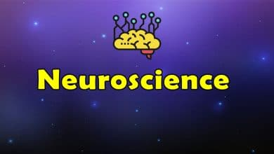 Photo of Awesome Neuroscience – Massive Collection of Resources
